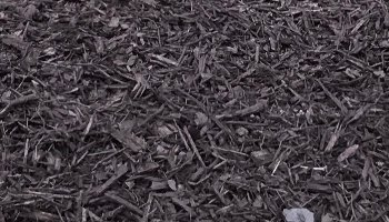 Most Popular Brown Dyed Mulch